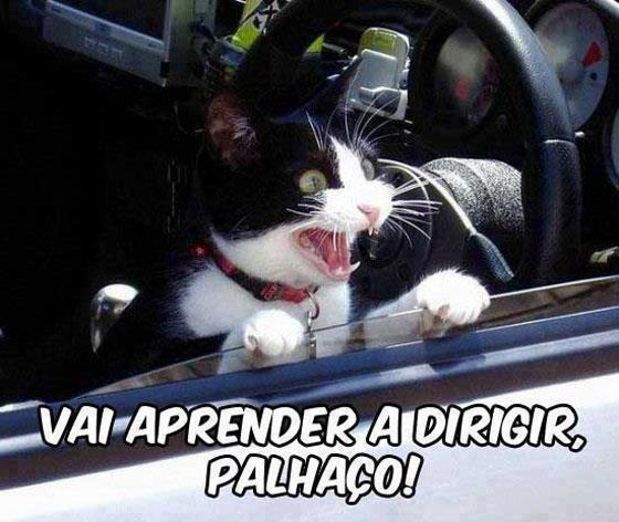 foto-2017-briga-no-transito-gato